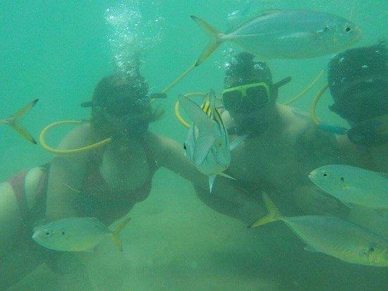 Aqua Adventure : FB_IMG_1503075136377_large.jpg