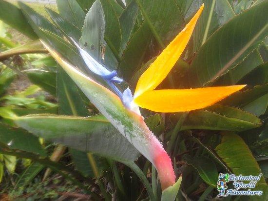 Hakalau, HI: Botanical World Adventures
