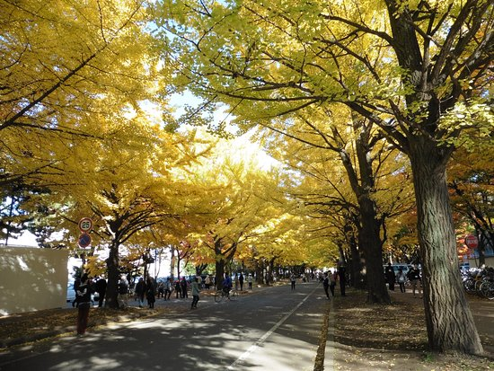 北海道大学札幌校区