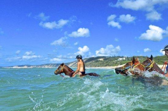レインボービーチからの馬の水泳