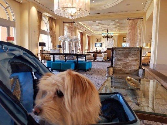 Lake Las Vegas Resort: This is the lobby