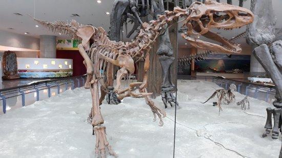 Gyeryongsan Natural History Museum