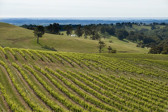 Dardanup, Australia: The Vineyard