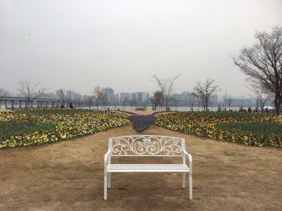 Le parc de Hangang : 漫步的好去處