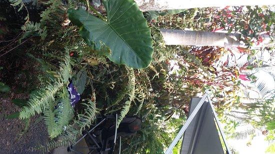 Tropical Hibiscus Caravan Park: IMG_20170828_153642788_large.jpg