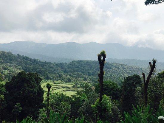 Landscape - Picture of Aakruthi Resorts, Madikeri - Tripadvisor