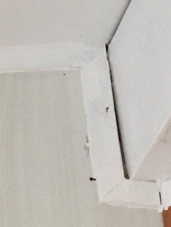 Sulniac, France: Malgré un endroit paisible et agréable, l'état des bungalows est complètement négligé!  Araignée