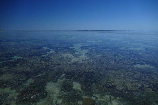 Perte de vue entre mer et espace quelles diff rences bild fr n lad - Difference entre sisal et jonc de mer ...