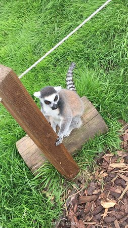 Reaseheath Zoo: received_466870143699016_large.jpg