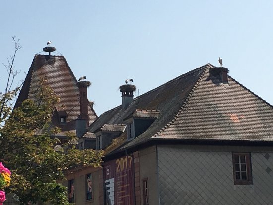 Storks : photo1.jpg