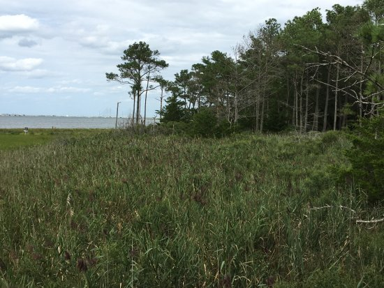 Ocean View, DE: Edge of the forest