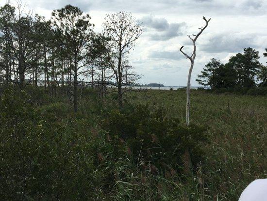 Ocean View, DE: Another view of the marsh.