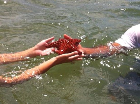 Barefoot Travelers Kayak Tour to Monkey Island : Many seastars are seen on our tour.