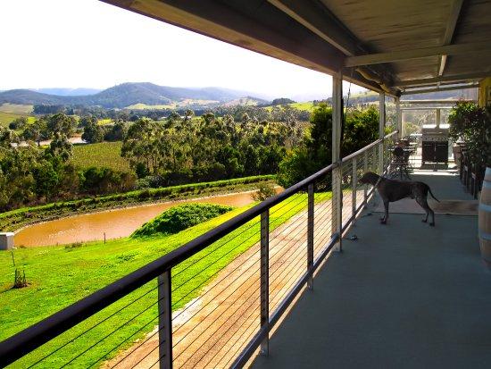 "Dixons Creek Estate - View from Cellar Door Deck w/ ""Dusty"" on Duty"