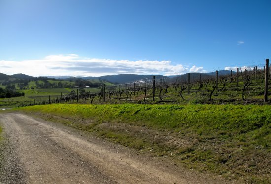 Dixons Creek Estate - Vineyard