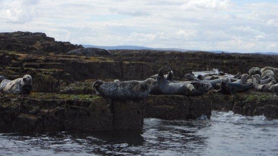 Northumberland, UK: Seals