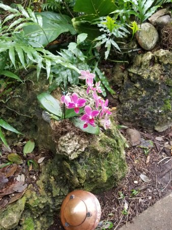Fairchild Tropical Botanic Garden: One of may orchids