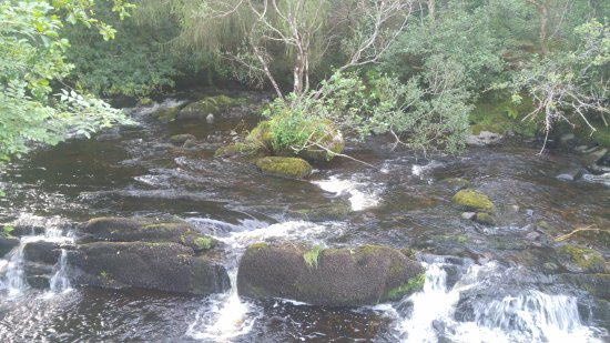 An Bruachan: creek in the B&B garden