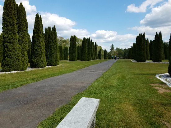 Barre, MA: emerald green arborvitae trees an amazing sight