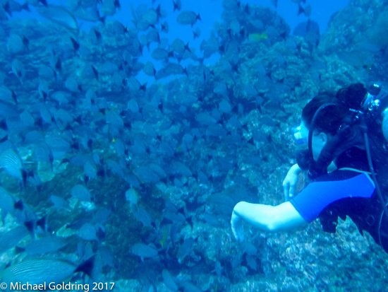 Drake Bay, كوستاريكا: Best dive ever!