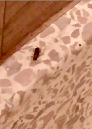 Empire Hotel: silverfish in shower