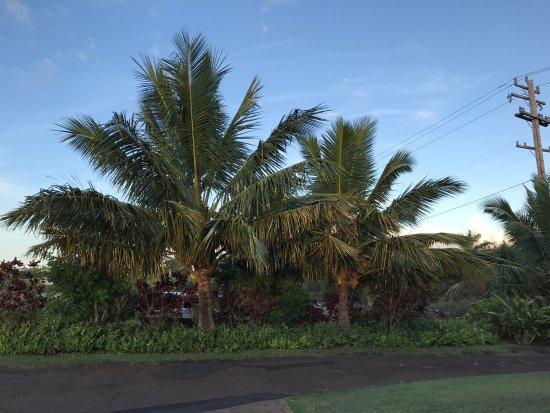 Kuau Inn: photo1.jpg