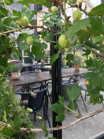 Soderhamn, Sweden: Månses design och Trädgårdscafe