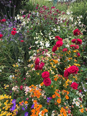 Abbeywood Gardens: Summer blooms full of colour