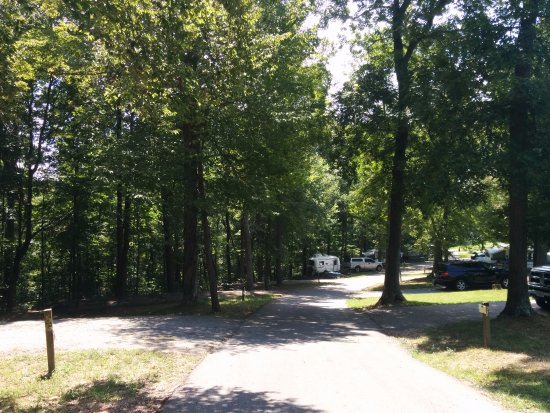 Lots of Tree Cover, but steep roads