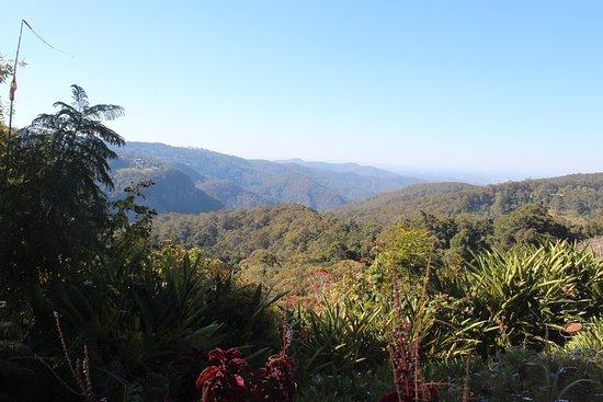 Tamborine Mountain, Australia: View from the terrace