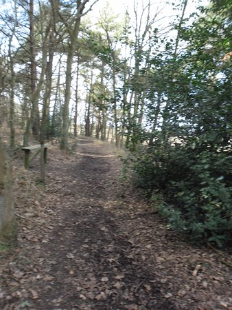 Blythburgh, UK: Winter walk - 3km or 5km circular walk from Old Custom House or a walk into Southwold about 70mi
