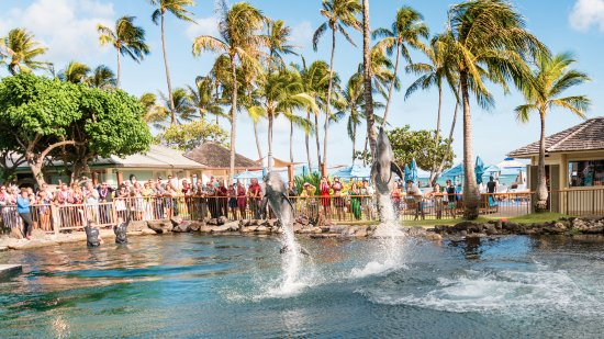 Dolphin Quest : Beautiful day at the Kahala with an incredible dolphin show.