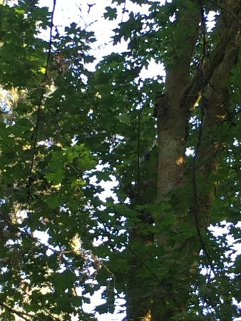 West Vancouver, Канада: Looking up through the branches.