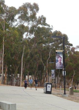 University of California San Diego: Campus Scene