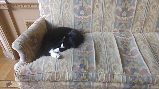 The Cat Cabinet : gato de verdad durmiendo