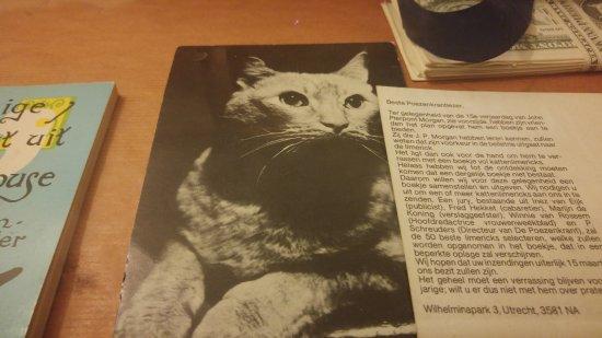 The Cat Cabinet : Morgan, el gato del dueño de casa