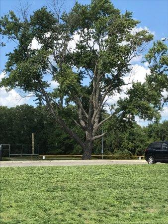 Toms River Veterans Recreational Complex: photo1.jpg