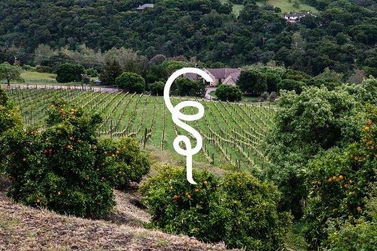 Cane & Spur Wine Tours