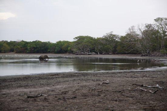 Wilpattu National Park : Elephant at the waterhold
