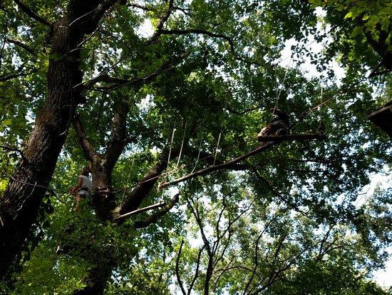 Parc Arbor et Sens