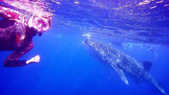 Always Diving & Water Sports: photo0.jpg