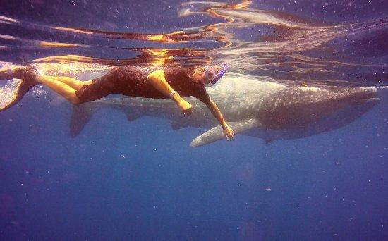 Always Diving & Water Sports: photo1.jpg