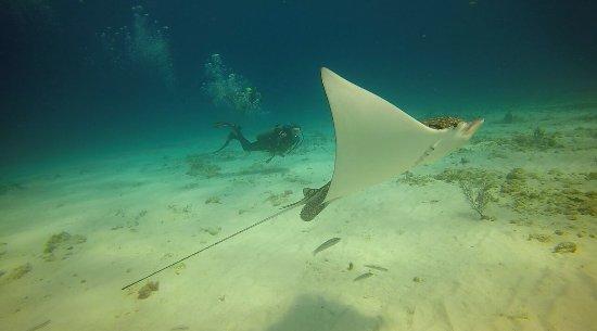 Always Diving & Water Sports: photo3.jpg