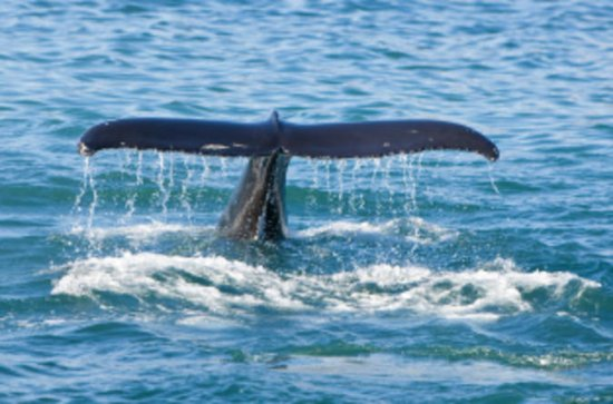 Whale Watching Cruise and Blue Lagoon