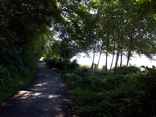 Ed Munro Seahurst Park: On a hot day it was cooling walking through the woodland