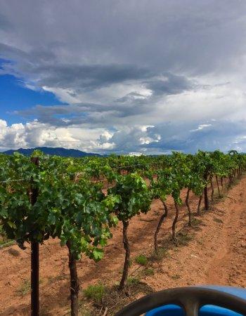 Elgin, Аризона: Views from Callaghan Vineyards