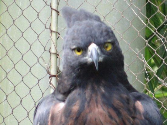 Departamento de Risaralda, Colombia: Aguila