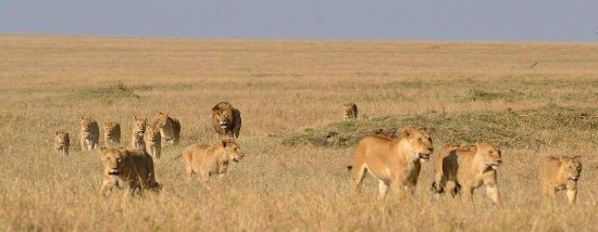 Serengeti Sunset Tours