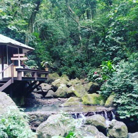 Koro Sun Resort and Rainforest Spa: IMG_20170823_151026_653_large.jpg