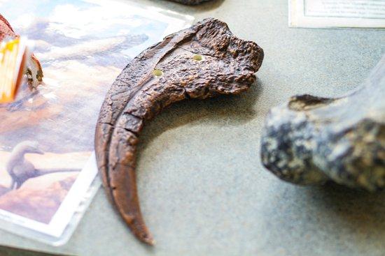 St. George Dinosaur Discovery Site at Johnson Farm : UtahRaptor claw